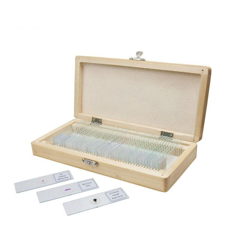 B&Crown 25 muestras de anatomía para microscopio