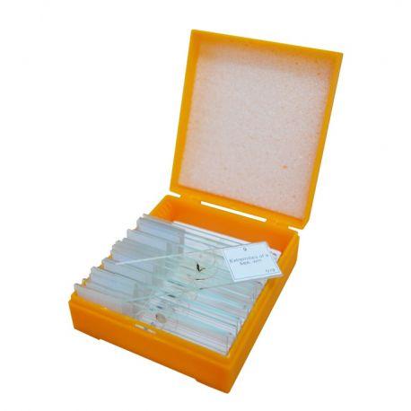 Caja con 10 Preparados para Microscopía Levenhuk N10 NG
